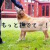 撫でられるのがもっと好きに♪犬の撫で方の基本3STEPと、練習の方法とは?