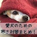 犬の寒さ対策、家の中も外も快適に過ごす方法のまとめ