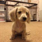 【要チェック】子犬を迎えた初日の過ごし方を徹底解説