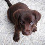 愛犬を預ける時の3つの疑問。どこに預ける?しつけはどうする?練習は必要?