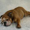 <保存版>夜間の愛犬の万が一…救急病院受診時の確認事項【獣医師監修】
