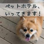 ペットホテルを利用する時、愛犬のためにしてあげたい準備のまとめ
