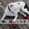 犬にも靴や靴下がある!役立つ場面と慣らすコツや注意点のまとめ!