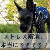 犬のストレス、気づいていますか?サインを見抜き、上手に解消してあげよう!
