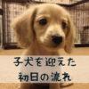 子犬を迎えた初日の流れを徹底解説!【初心者さん必見】