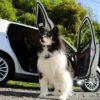 愛犬とのドライブが楽しみになるコツ8選!