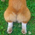 犬の気持ちを読むポイント大特集!「しっぽを振る=嬉しい」だけじゃない?!