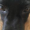 犬の目ヤニ。お手入れのコツと病気のチェックポイント【獣医師監修】
