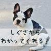 愛犬のしぐさから気持ちを読む達人になる方法は?