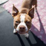 危険!犬に絶対してはいけない叱り方4つ。上手な叱り方や他の方法は?