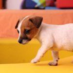 犬の予防接種についての基礎知識!種類は?副作用は?【獣医師監修】