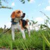 ダニが犬に寄生した…!その深刻な被害と効果的な対策とは?【獣医師監修】
