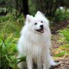 犬がフィラリアに感染したら…症状は?治療は?治るの?【獣医師監修】