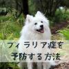 愛犬のフィラリア症の予防は正しい知識と方法で!【獣医師監修】