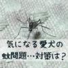 愛犬の「蚊問題」。虫よけだけで満足しないで!本当に必要な対策とは?【獣医師監修】