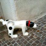 犬との散歩のNGマナー6選!これ、無意識にしてない?白い目で見られているかも…。