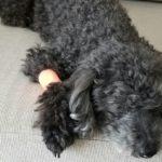 犬のケガ…「意識するべき2つの鉄則」と「実際に使える対応方法」【獣医師監修】