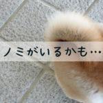 ノミが犬に寄生したら…病気や被害と対策のまとめ【獣医師監修】
