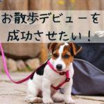 必見!子犬とのお散歩デビューの前にするべき5つのことは?