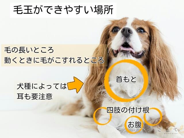 ブラッシングの頻度を毎日にするために、おさえておきたい犬のブラッシングのポイント