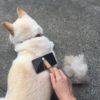 愛犬に必要なブラッシングの頻度は?