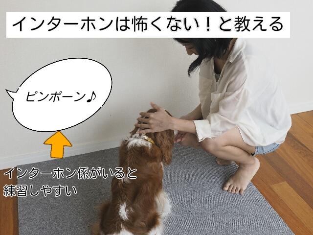 犬が吠える理由がインターホンを警戒しているからであれば、警戒心をとく練習をする