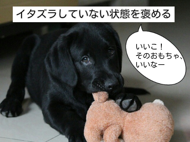 イタズラをしていない時の行動を褒めることが犬のイタズラ対策には必要