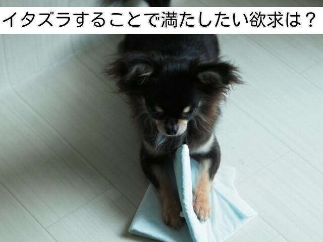 イタズラをする犬の持つ欲求を考えることがイタズラ対策には必要