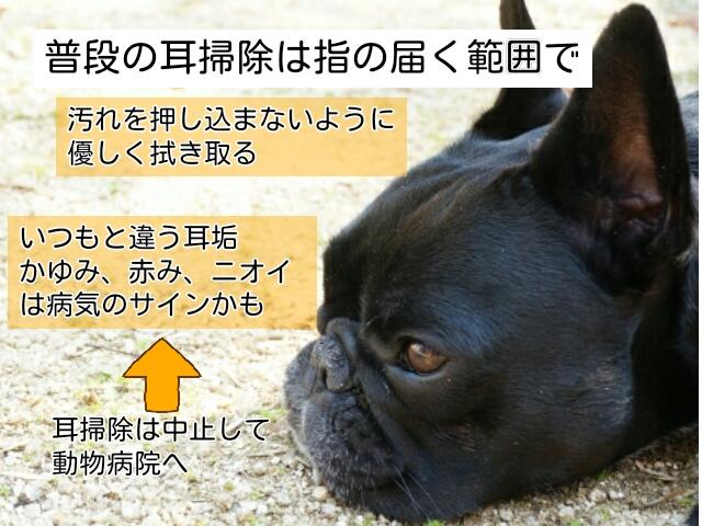普段は子犬の耳に見えるよごれをとる程度の耳掃除でよい