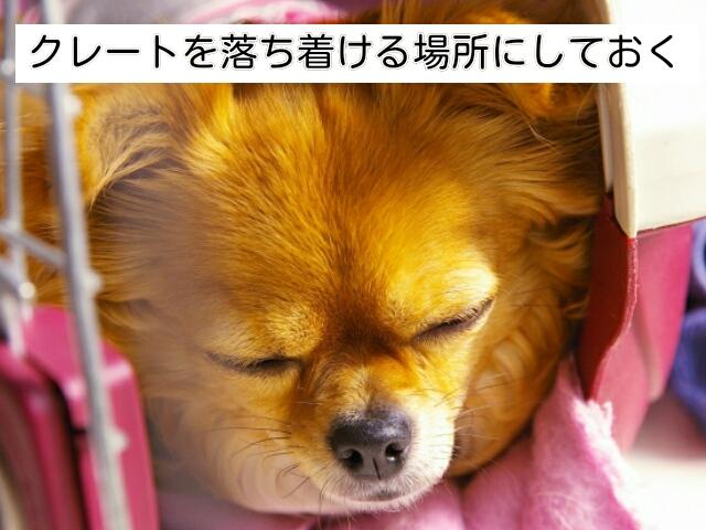 クレートは犬との旅行に必要な持ち物