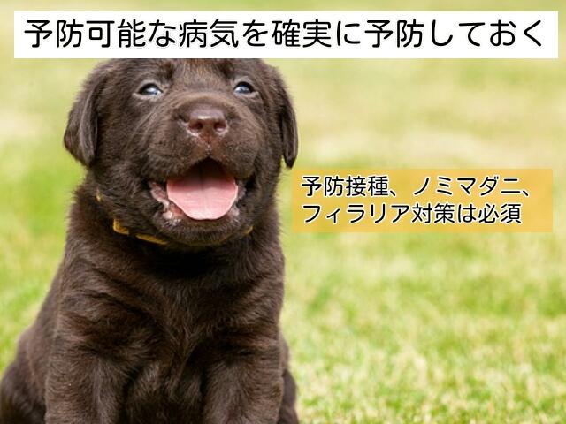 愛犬がペットホテルを利用する前の準備として、予防は必須