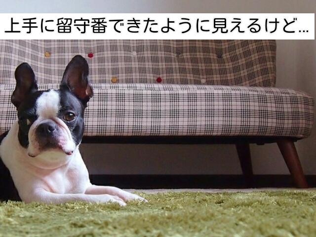 留守番のしつけの中で不安に気づいてもらえた犬