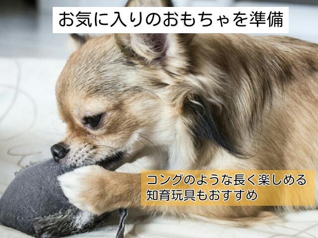 留守番のしつけ中におもちゃで遊ぶ犬