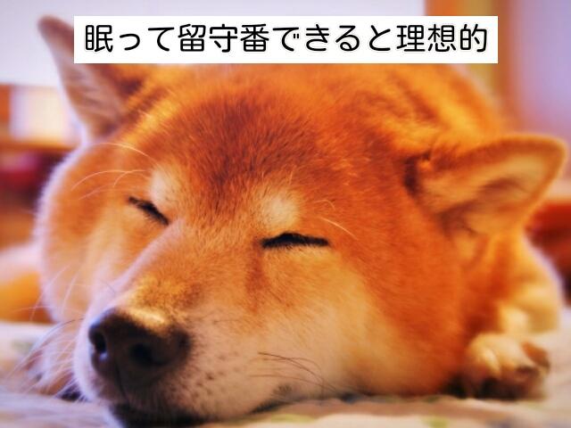 留守番の間は犬が眠っていられると理想的