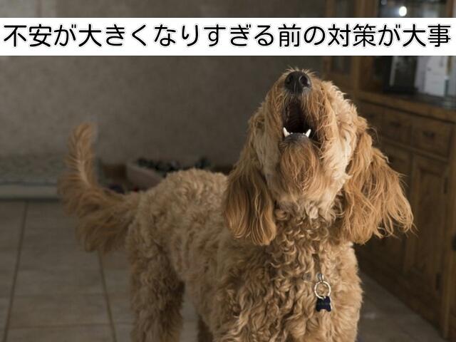 犬の留守番中のストレスが大きくなりすぎると事態は深刻化する