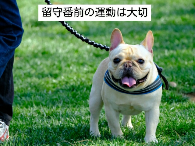 犬の留守番前にストレス発散させることは非常に大切