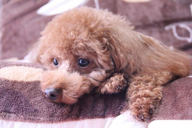 犬の留守番中のストレス対策は、ストレスについては正しく知ることから