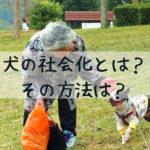 犬の社会化とは?犬に必要な社会化トレーニングの進め方