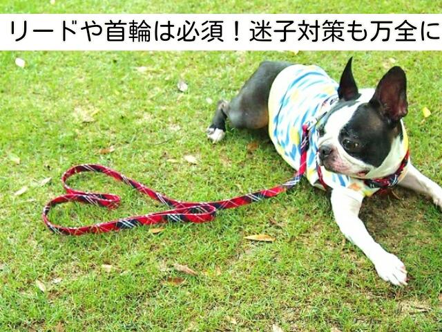犬との旅行に必須の持ち物であるリードと迷子対策
