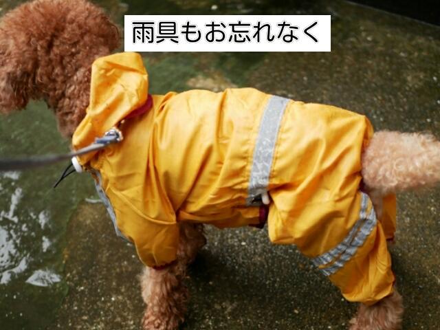 雨具も犬との旅行の持ち物として必要