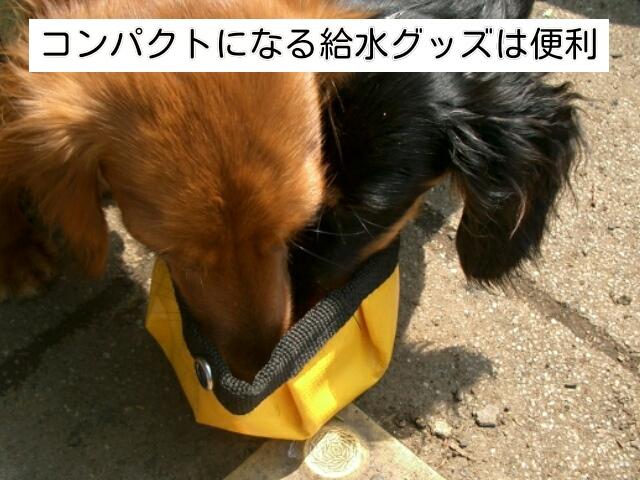 携帯しやすい飲水グッズは犬の旅行の持ち物として人気