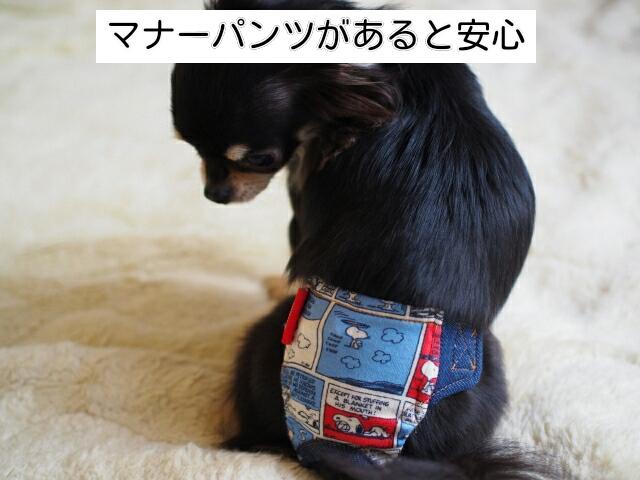 旅行先での粗相対策として、持ち物に犬のマナーパンツを入れると安心