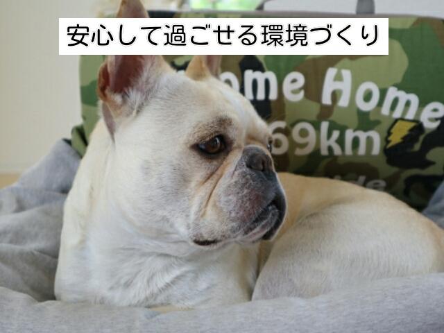 留守番中、犬が安心して過ごせるような環境を着くておく