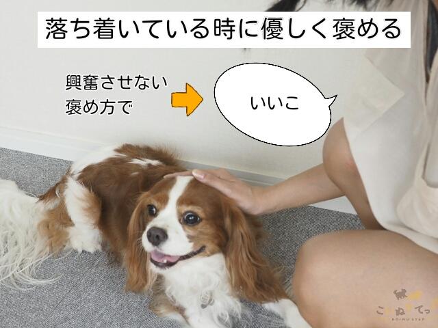 マットの上でリラックスしている犬を褒めることが大事