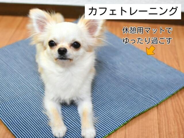 カフェトレーニングができているなら旅行の持ち物に犬用マットも入れておく