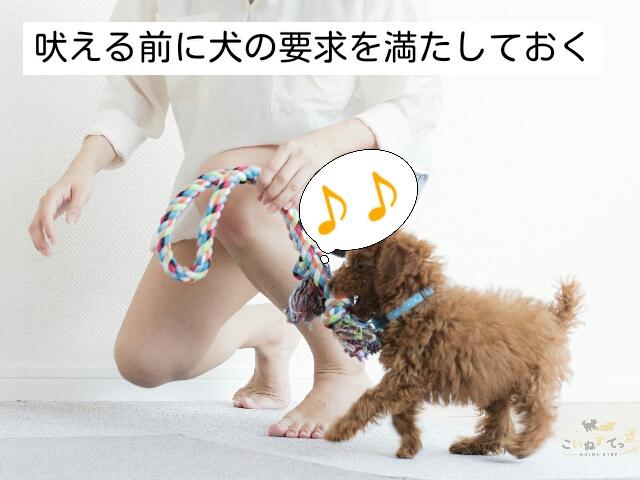 犬のニーズが満たされているかをこまめに見直すことが吠え対策になる