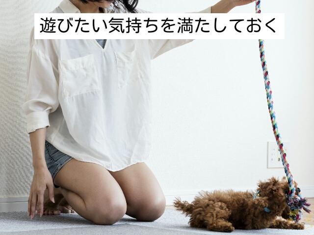 イタズラする時間より少し早い時間帯に先に一緒に遊ぶことで犬のイタズラ対策になる