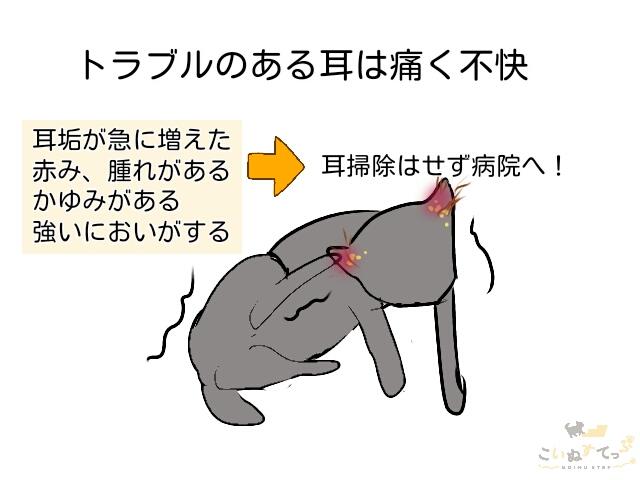 子犬の耳に病気がある時は耳掃除せず病院へ