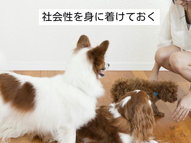 ペットホテルでのストレスを減らすための準備として大事な犬の社会化
