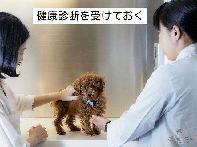 ペットホテルを利用する準備として大事な犬の健康診断